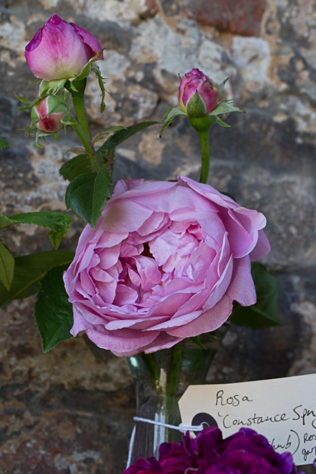 Sissinghurst - Rosa 'Constance Spry'