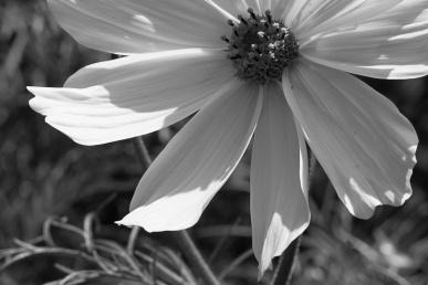Sissinghurst - White Garden