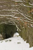 Winter Gardens-1