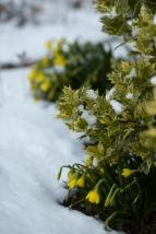 Winter Gardens-3