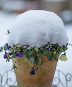Winter Gardens-4