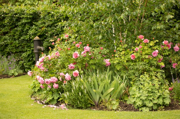 Rose-filled border