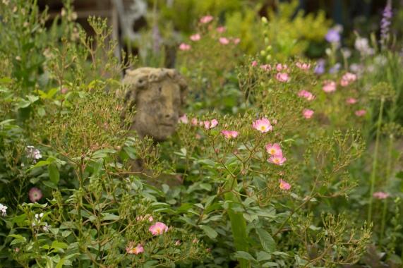Statue & Rose