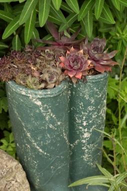 Succulents in Wellies
