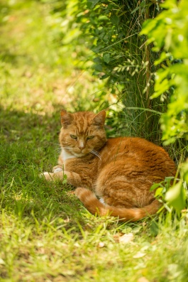 Ginny's Cat
