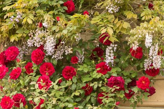 Long Melford Open Gardens-108