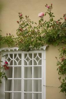 Long Melford Open Gardens-121