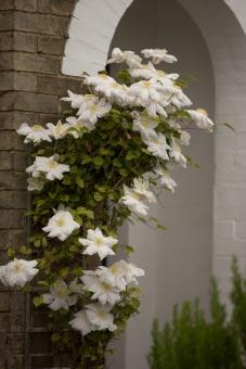 Long Melford Open Gardens-122