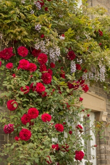 Long Melford Open Gardens-125