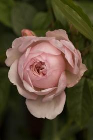 Beech Cottage - Constant Gardener