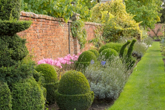 Box Topiary and Nerines