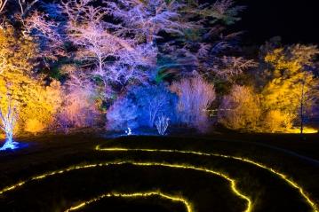 Illuminated Trail Helmingham-29