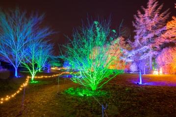 Illuminated Trail Helmingham-30