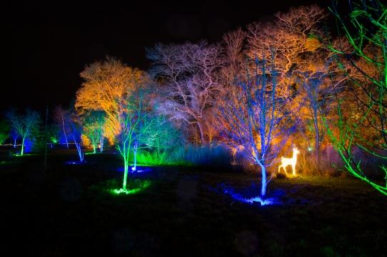 Illuminated Trail Helmingham-31