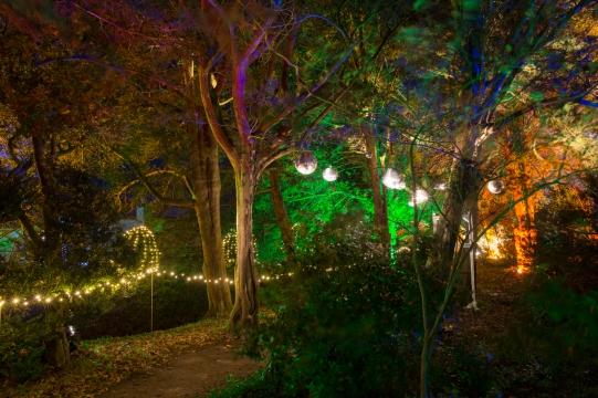 Illuminated Trail Helmingham-32