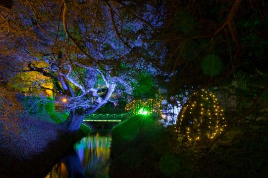 Illuminated Trail Helmingham-33