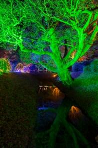 Illuminated Trail Helmingham-42