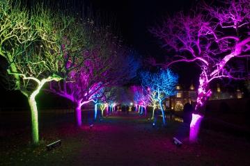 Illuminated Trail Helmingham-48